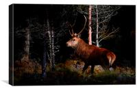 Stag in the woods, Canvas Print