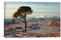 Winter in Strathglass, Canvas Print