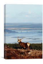 Stag Overlooking the Beauly Firth and Inverness, Canvas Print