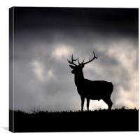 Stag silhouette, Canvas Print