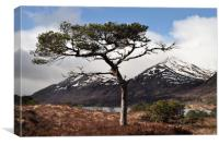 Glen Affric  , Canvas Print
