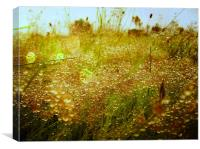 dewdrops in summer, Canvas Print