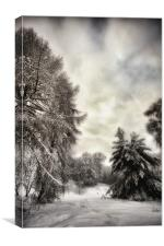 Winters Woodland Walk, Canvas Print