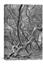 Rooty Trunk, Canvas Print