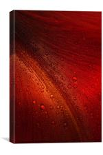 Red Amaryllis Abstract 3, Canvas Print