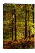 Cannock Chase Autumn, Canvas Print