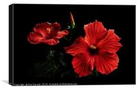 Red Hibiscus up Close, Canvas Print