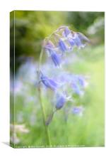 Bluebell Chaos, Canvas Print