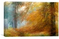 Beech Tree on Cannock Chase, Canvas Print