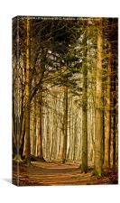 Dunnotar Woods, Canvas Print