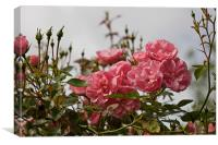 Pink Roses in The Mist, Canvas Print