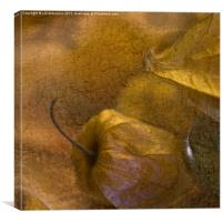 Sweet Gold, Canvas Print