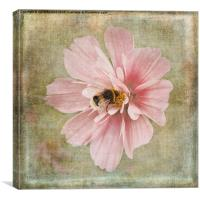 Busy Bee, Canvas Print