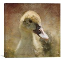 Miss Duck, Canvas Print