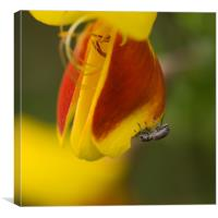 Broom for Lunch, Canvas Print