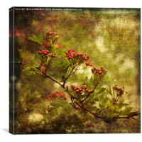 Pink Hawthorn in Flower, Canvas Print