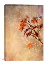 Maple Leaves, Canvas Print