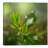 Young Holly Leaves, Canvas Print