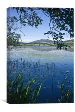 Lilies on the Loch, Canvas Print