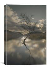 Lone Tree Reflection, Canvas Print