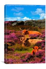 Highland cattle Baslow edge, Canvas Print
