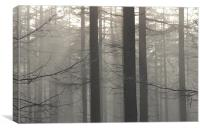 Misty Forest, Canvas Print