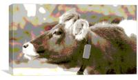 Jersey Cow, Canvas Print