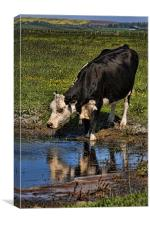 Drinking Cow, Canvas Print