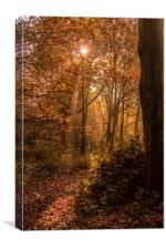 In to the Woods, Canvas Print
