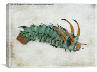 Hickory Horned Devil (Citheronia regalis), Canvas Print