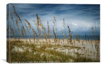 Through the Sea Oats, Canvas Print