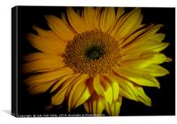 Sunflower Close Up, Canvas Print
