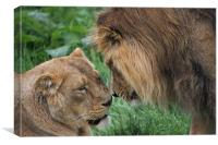 Lion and Lioness, Canvas Print