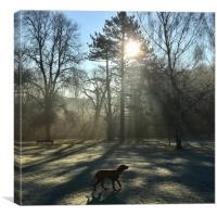 Frosty morning , Canvas Print