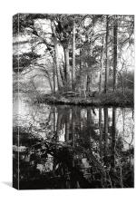 Trees and reflections, Canvas Print
