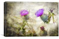 Scottish Thistle, Canvas Print