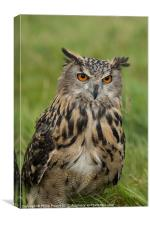 Eagle Owl Sitting in Grass, Canvas Print