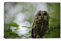 Tawny Owl Perched in Tree, Canvas Print