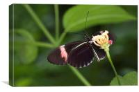 Butterfly eating nectar from a flower, Canvas Print