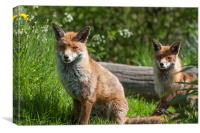 Pair of English Red Foxes, Canvas Print