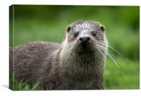 River Otter Close Up, Canvas Print