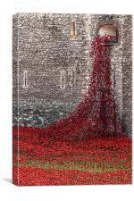 Blood Swept Lands and Seas of Red - Red Poppy Cas, Canvas Print