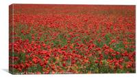 Field of Red Poppies, Canvas Print