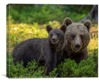 Mother Brown Bear with Cub, Canvas Print