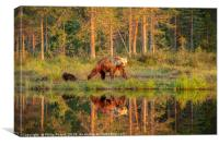 Wild Brown Bears by the Lake, Canvas Print