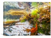 in the rockpool, Canvas Print