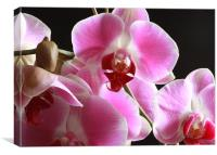 Orchid - Close Up, Canvas Print