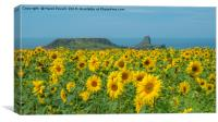 Sunflowers at Worms Head, Canvas Print