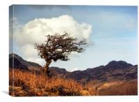 Lone Tree at Mymbyr, Canvas Print