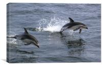 Peales Dolphins Porpoising, Canvas Print
